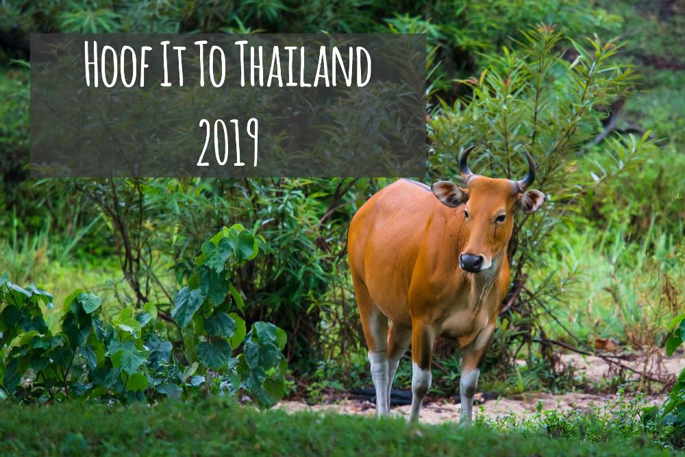 Hoof it to Thailand
